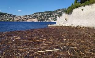 Ce lundi, une nappe de bois se concentre devant la plage de Passable, à Saint-Jean-Cap-Ferrat.