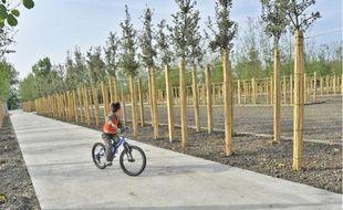 En 2016, plus 4 500 arbres auront été plantés dans le parc aux angéliques de Bordeaux.