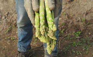 Les asperges vertes de Provence de Didier et Sabine Ferreint.