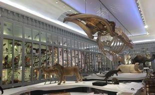 La galerie du 19ème du muséum de Bordeaux a été rénovée, et sera agrémentée de spectacles multimédia