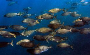 Un ban de poissons (photo d'illustration)