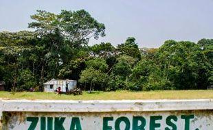 L'entrée de la forêt Zika en Ouganda, le 29 janvier 2016