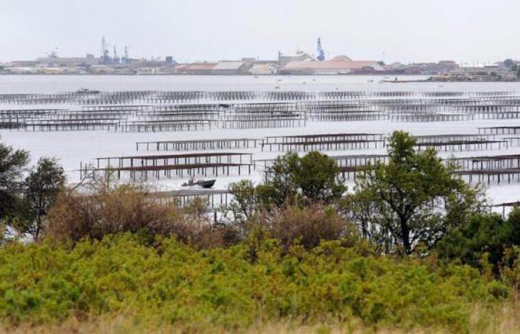 """La préfecture de l'Hérault a annoncé vendredi avoir suspendu provisoirement la récolte et la commercialisation des huîtres et des moules en provenance de l'étang de Thau en raison """"des résultats d'analyses microbiologiques supérieurs à la norme autorisée""""."""