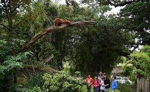 Un panda roux au dessus de jeunes soigneurs d'un jour venus découvrir l'envers du décor du métier de soigneur au parc animalier de Branféré à Le Guerno dans le Morbihan, le 29 juillet 2016