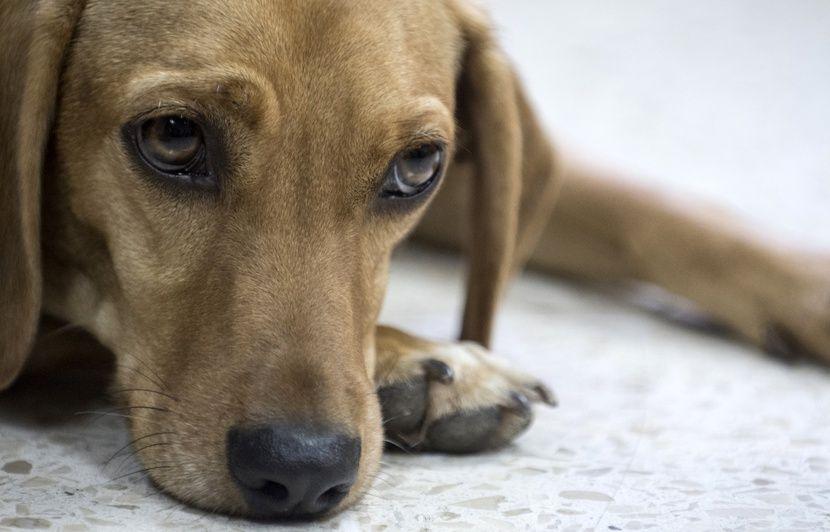 PODCAST. «Minute Papillon!»: Un chien assiste au procès de son bourreau et des crocodiles au cinéma