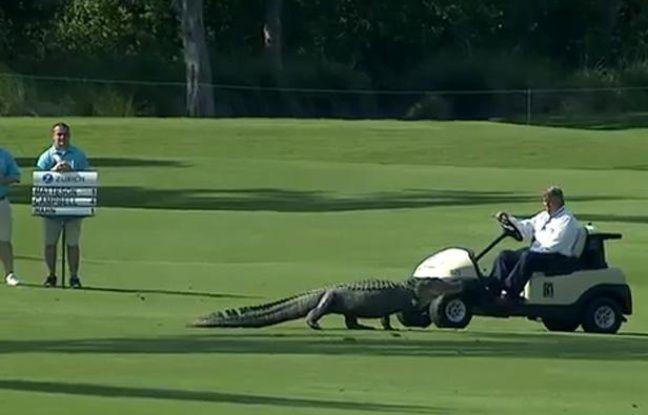 Capture d'écran d'un alligator s'invitant sur un green de golf en plein tournoi à la Nouvelle-Orléans.