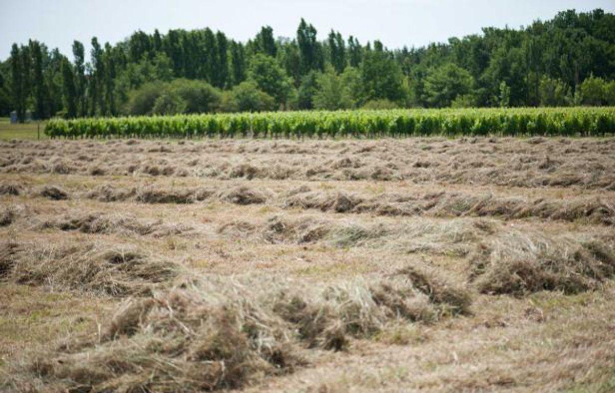 La sécheresse sévit dans le Tarn, le 13 juin 2011. – LANCELOT FREDERIC/SIPA