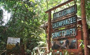 La réserve de chimpanzés de Tacugama prés de Freetown, la capitale du Sierra Leone, avait dû fermer en août 2014, en pleine explosion de l'épidémie d'Ebola