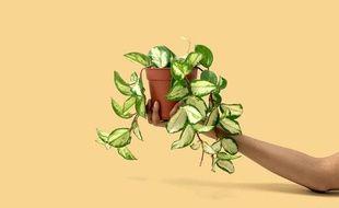 Végétal à venir adopter à la grande vente de Plantes pour Tous