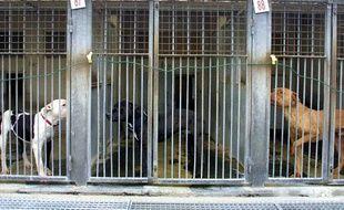 La fourriere de la SPA de Gennevilliers accueille les chiens trouvés ou abandonnés.