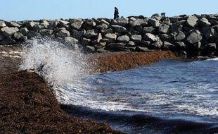 L'Australie veut faire inscrire dans le protocole de Londres sur la prévention de la pollution des mers l'interdiction absolue de fertiliser les océans sans justification scientifique, a annoncé jeudi le gouvernement australien.