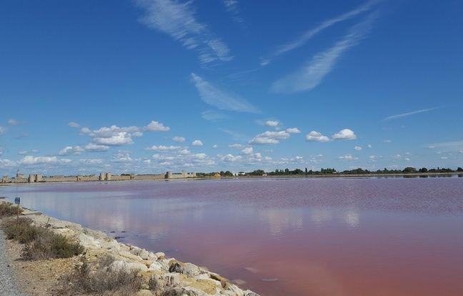 Dans les tables salantes des Salins du midi, lorsque le taux de salinité est aux maximum, une petite algue se développe et leur donne cette couleur rose. Cette algue est utilisée en cosmétique.