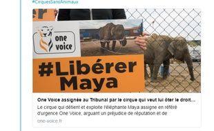 L'annonce de l'assignation en référé d'urgence publiée sur le compte Twitter de l'association One Voice, basée à Strasbourg.