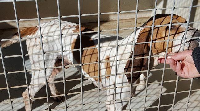 montpellier maltrait s malades apr s une chienne de vie ces animaux r vent d 39 un parrain. Black Bedroom Furniture Sets. Home Design Ideas