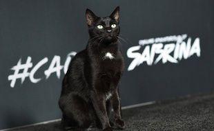 En 2018, « Les nouvelles Aventures de Sabrina » sur Netflix ont, cette fois, fait appel à de vrais chats pour le rôle de Salem.