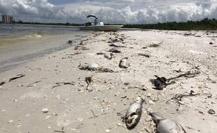Les autorités ont décrété l'état d'urgence en Floride, où une marée rouge décime les populations aquatiques.