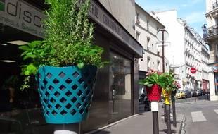 Les chapotelets, une bonne idée pour embellir les poteaux de rue et verdir la ville...