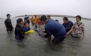 Un groupe de volontaires et de vétérinaires tente de secourir une baleine dans le sud de la Thaïlande, le 28 mai 2018.