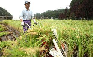 Une rizière au Japon, dans la région d'Iwate.