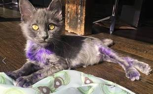 Smurf, le petit chat violet.