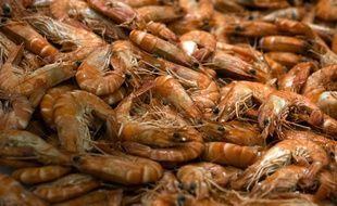 Des crustacés seraient contaminés par des particules de plastique.