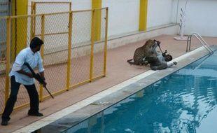 Un léopard attaque un homme identifié par les médias indiens comme Sanjay Gubbi, un défenseur des animaux, dans une école privée proche de Bangalore, le 7 février 2016
