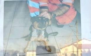 Retrouvée sur une voie ferrée tarnaise par des agents SNCF, cette petite chienne recherche son maître.