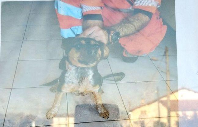 Tarn: Des agents SNCF récupèrent un chien sur la voie ferrée, son propriétaire retrouvé