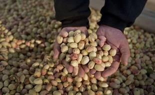 Illustration d'une récolte de pistaches.