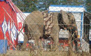 Samba devait être le premier éléphant à intégrer le refuge installé dans le Limousin.