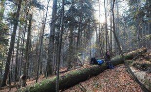 """Des hêtres centenaires et majestueux grattent le ciel au coeur des Carpates. La Roumanie, qui compte la plus grande surface de forêts vierges de l'Union européenne, veut mieux protéger ce """"trésor"""" pour le climat et la biodiversité, une tâche ardue."""