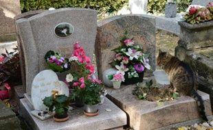 Un chat sur une tombe au cimetière pour animaux d'Asnières, le 23 octobre 2013