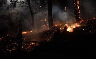 Les pompiers à pied d'oeuvre dans la forêt de Chiberta, à Anglet, le 30 juillet 2020.