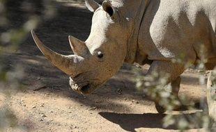 Un rhinocéros blanc au zoo de Johannesburg en Afrique du Sud le 25 juillet 2013