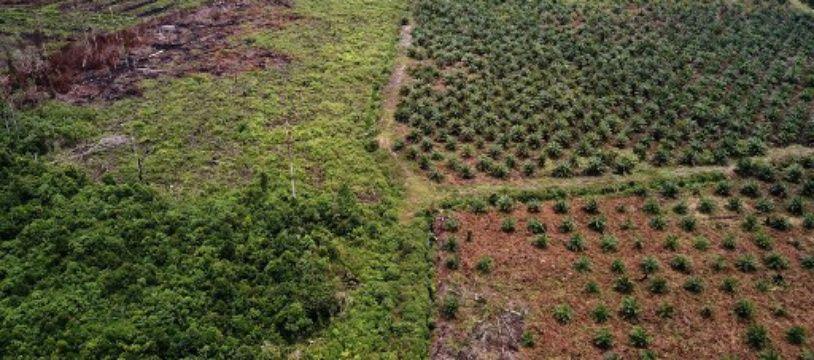 Photo aérienne d'une plantation d'huile de palme dans une réserve pourtant protégée sur l'île de Sumatra en Indonésie.