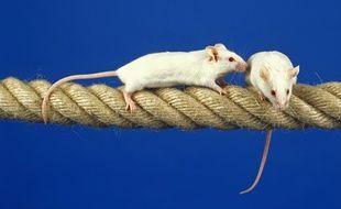 Illustration de souris