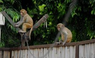 Des singes sur un portail dans l'arrière-cour d'une maison à New Delhi (Inde), le 5 août 2014