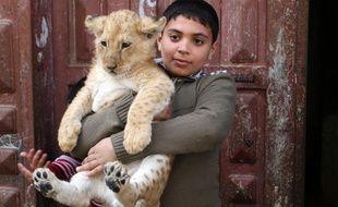 Une famille gazaouie adopte deux lionceaux.