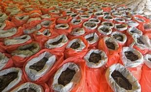 Douze tonnes d'écailles de pangolin ont été saisies à Singapour.