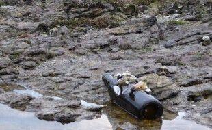 Une bouteille à la mer couverte de coquillages a été découverte en février à Sarzeau, dans le Morbihan. L'expéditeur est recherché.