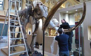 Ce squelette de mammouth sera vendu le 16 décembre aux enchères à Lyon.