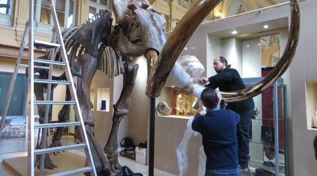 video lyon un gigantesque squelette de mammouth vendu aux ench res pr s de euros. Black Bedroom Furniture Sets. Home Design Ideas