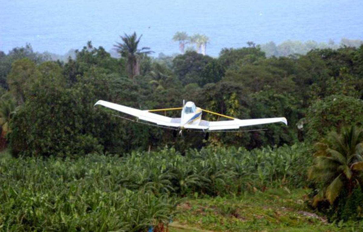 Epandage de pesticides sur des bananiers en Guadeloupe. – SIPA