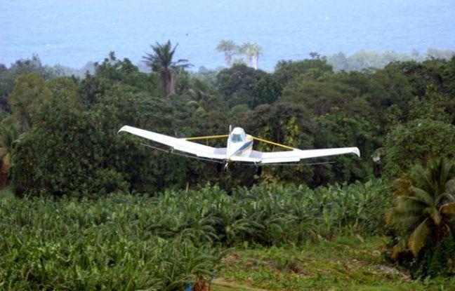 Epandage de pesticides sur des bananiers en Guadeloupe.