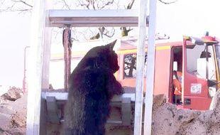 Le chat a emprunté seul l'échelle des pompiers.