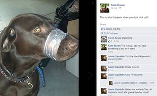 Cette photo du chien de Katie Brown, bâillonné avec du scotch, a soulevé une vague d'indignation sur Facebook aux Etats-Unis.