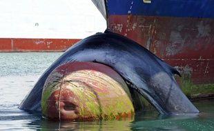 Une baleine est entrée en collision avec un cargo le 2 juin et est arrivée dans le port de Marseille.