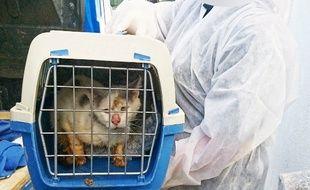 Un chat sauvé par la Fondation Brigitte Bardot, à Waziers, dans le Nord.
