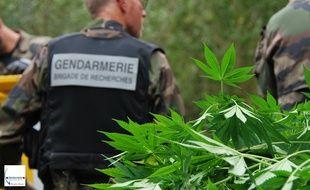 120 pieds de cannabis ont été découverts sur l'île Héron