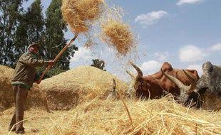 Un fermier du village Ada, dans la région d'Oromia, en Ethiopie, travaillant à la moisson de teff le 21 février 2014